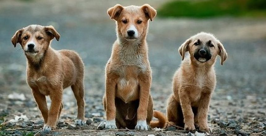 dogs-984015_640