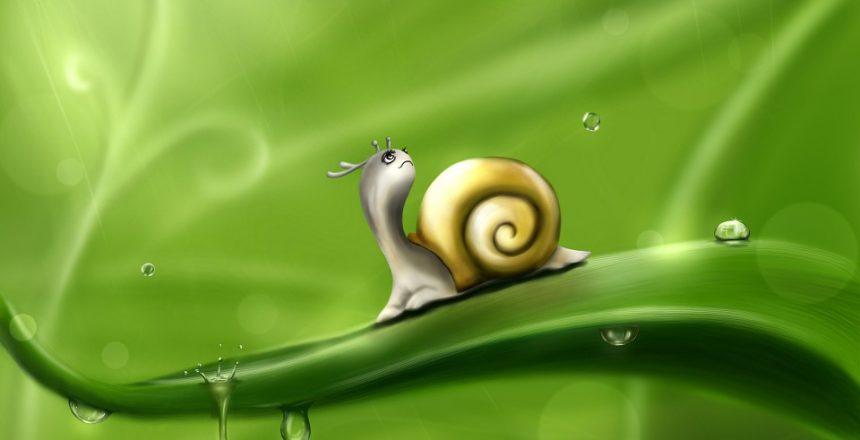 snail-83672_960_720